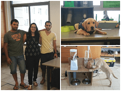 סטודנטים פיתחו מערכת לטיפול בכלבים גם כשנמצאים מחוץ לבית